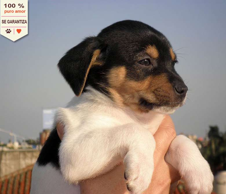 sb_cachorro